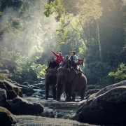 The Elephant Experience of a Lifetime in India with Tips from Sunset Travel and Cruise in Chicago, IL 60614