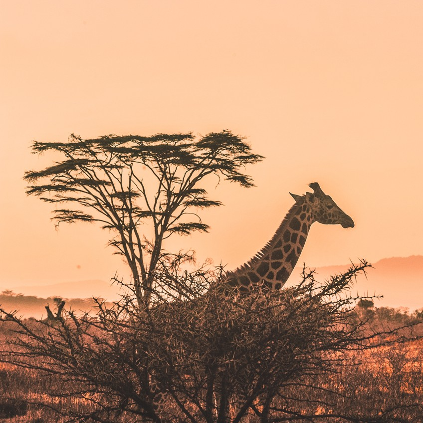 Africa Vacation Packages from Chicago - Sunset Travel & Cruise, W Fullerton Ave 60614